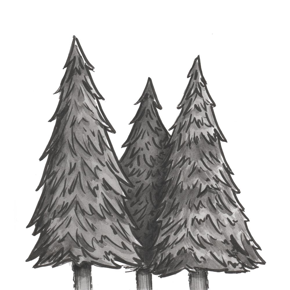 Tree Illustration - Gillian Tracey Design