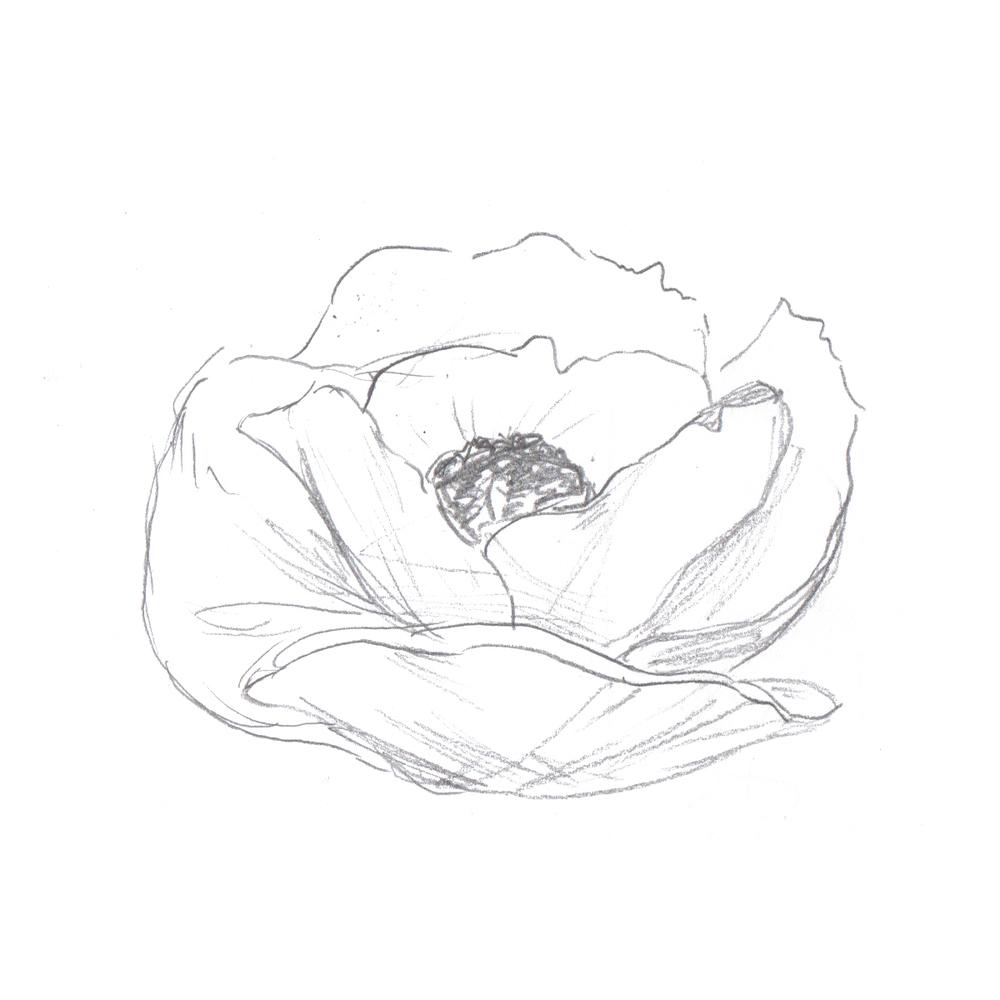 Poppy Sketch - Gillian Tracey Design