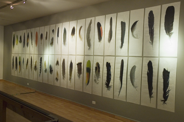 Collected Poems, Feathers  , Installation View Lonsdale Gallery, 2007