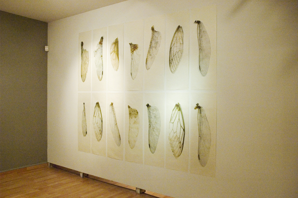 Collected Poems, Wings  , Installation view Lonsdale Gallery, 2007