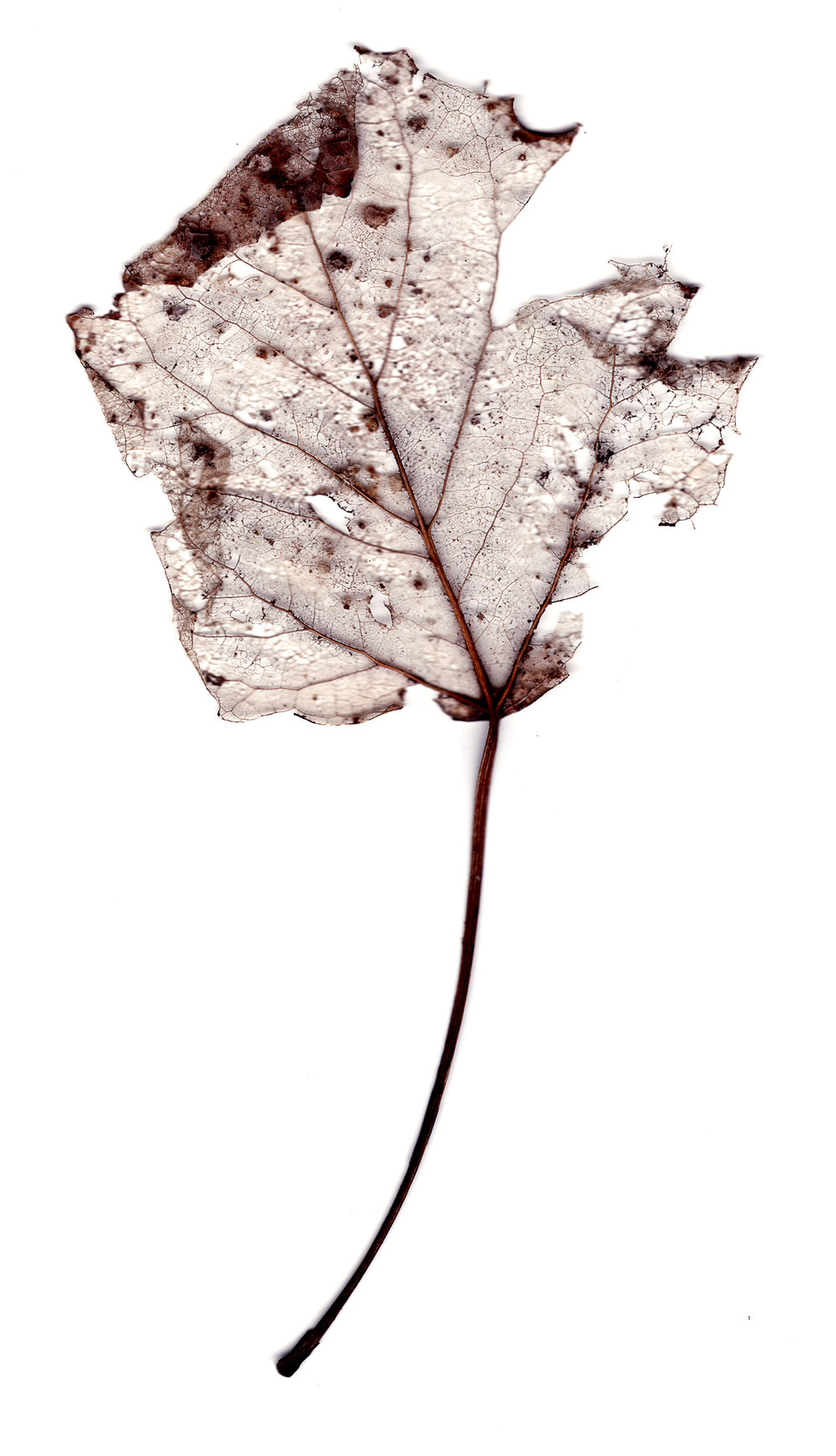 Collected Poems, Aspen Leaves0001  , Ink Jet print on Washi paper, 13x27 inches, 2007, ed. 3