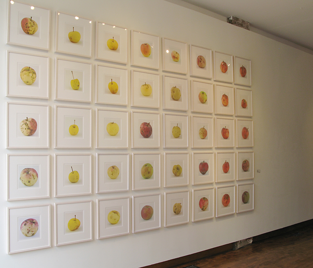 Feral Apples  , Installation view, Lonsdale Gallery, 2009