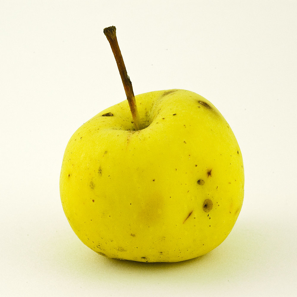 Feral Apples, Glen Williams Old School Rd_105  , Archival Ink Jet print, 8x8 inches, 2008, ed. 5