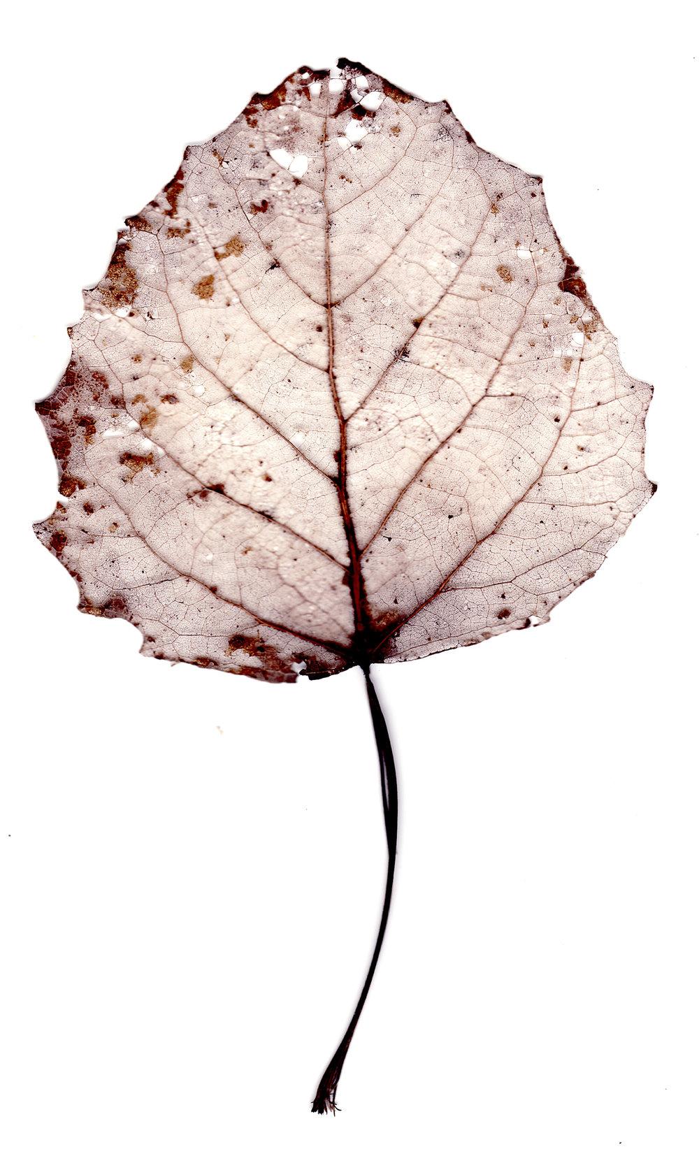 leaves0007.jpg