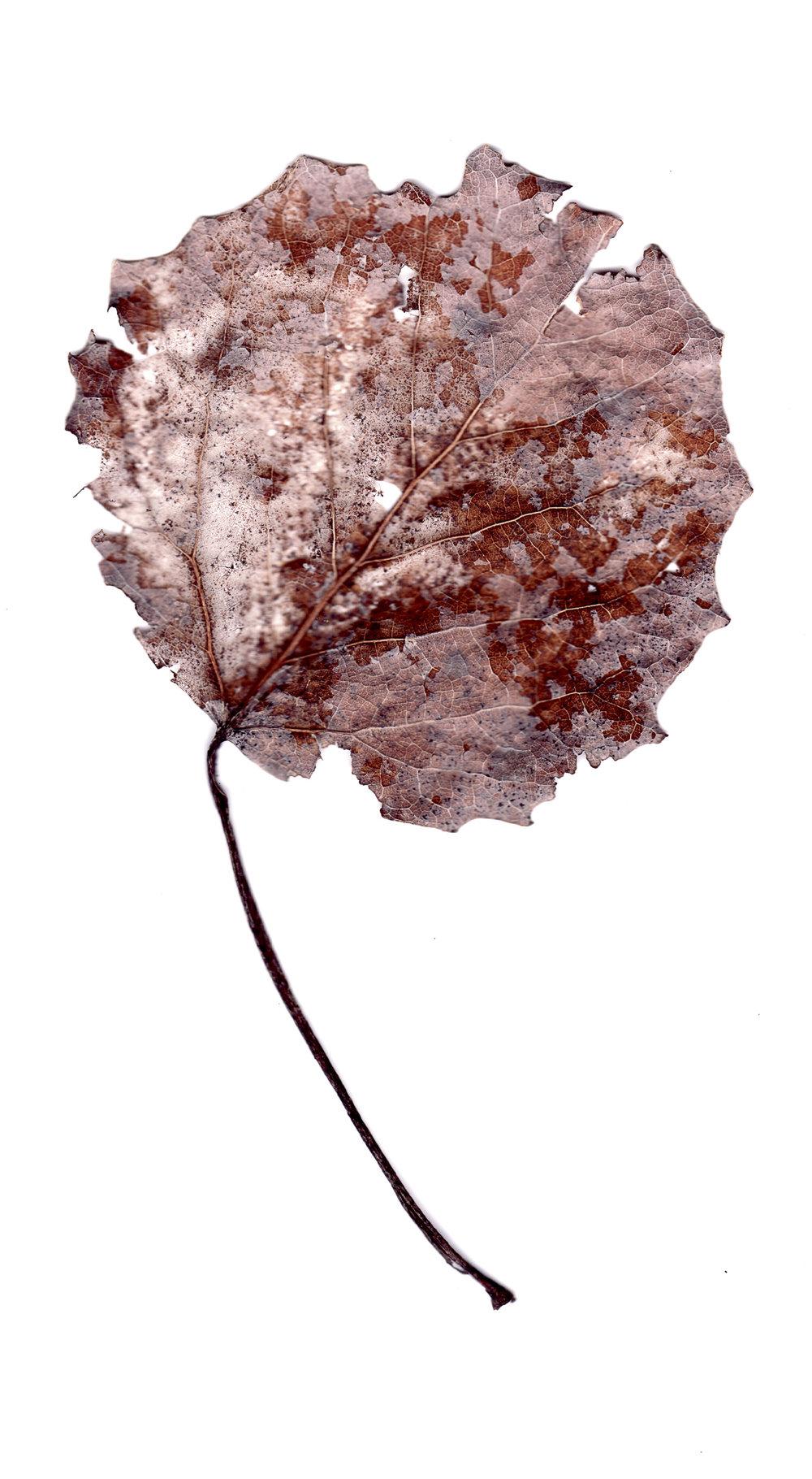 leaves0009.jpg