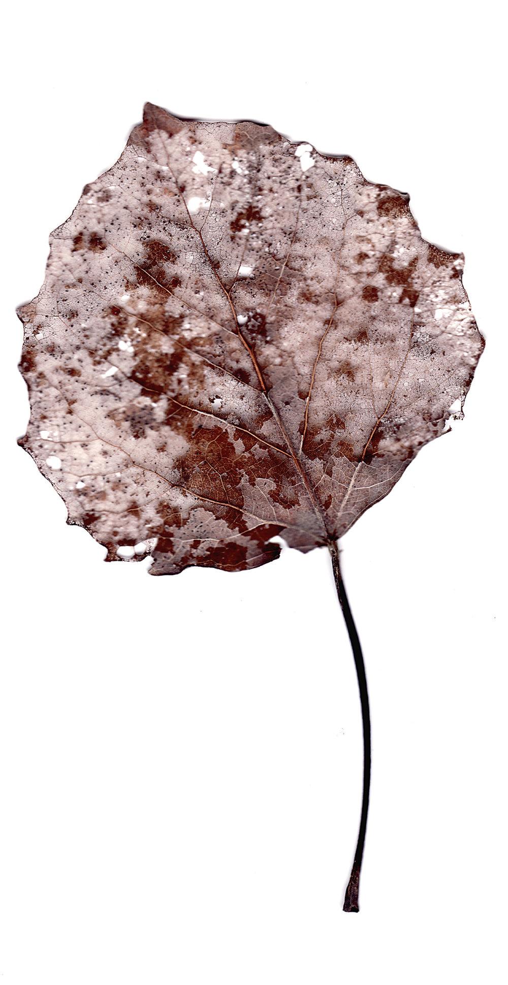 leaves0010.jpg