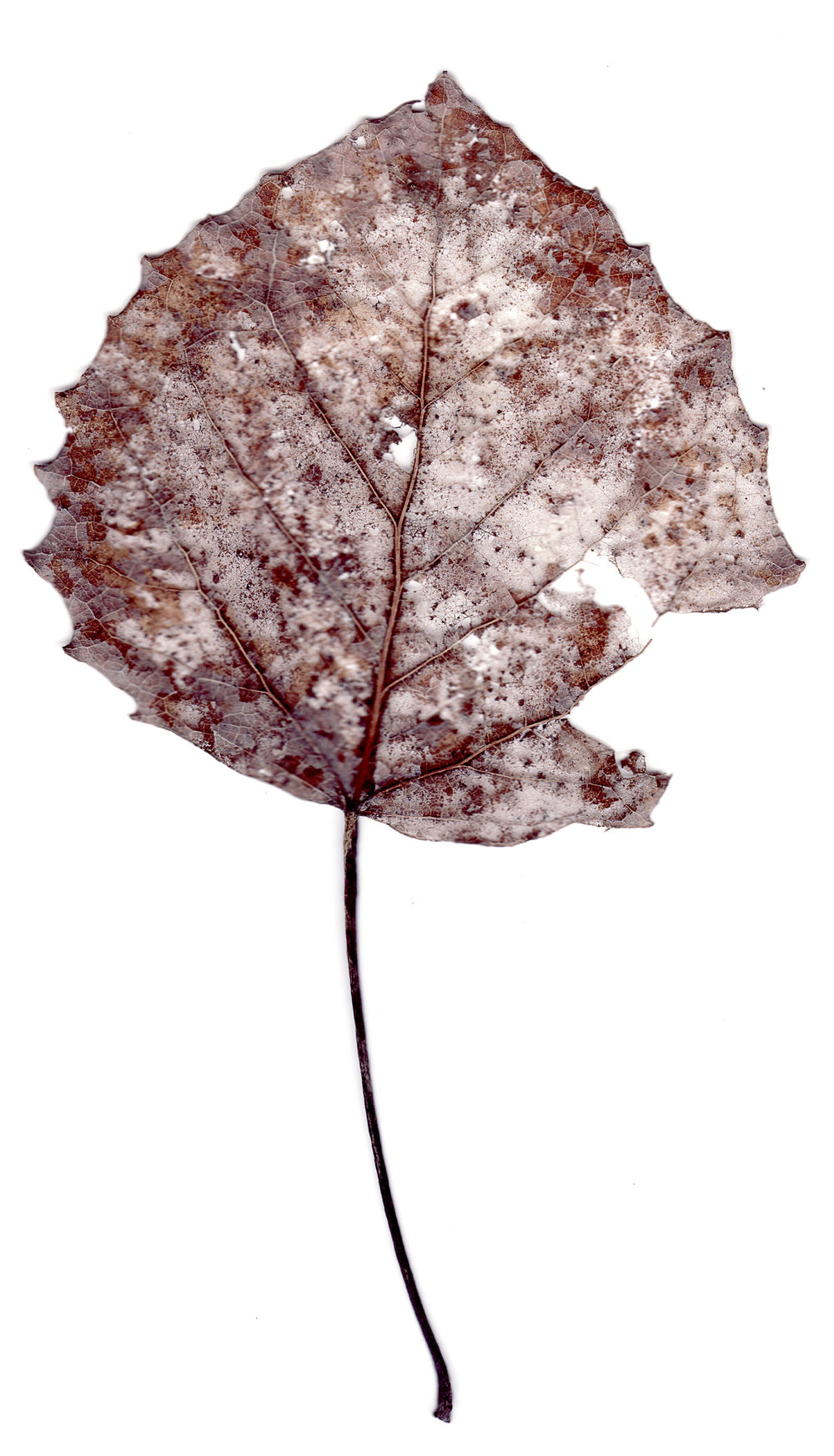 leaves0016.jpg