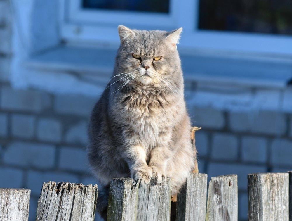Feeling tense like this grumpy cat? Photo by  Gabriel Matula  on  Unsplash