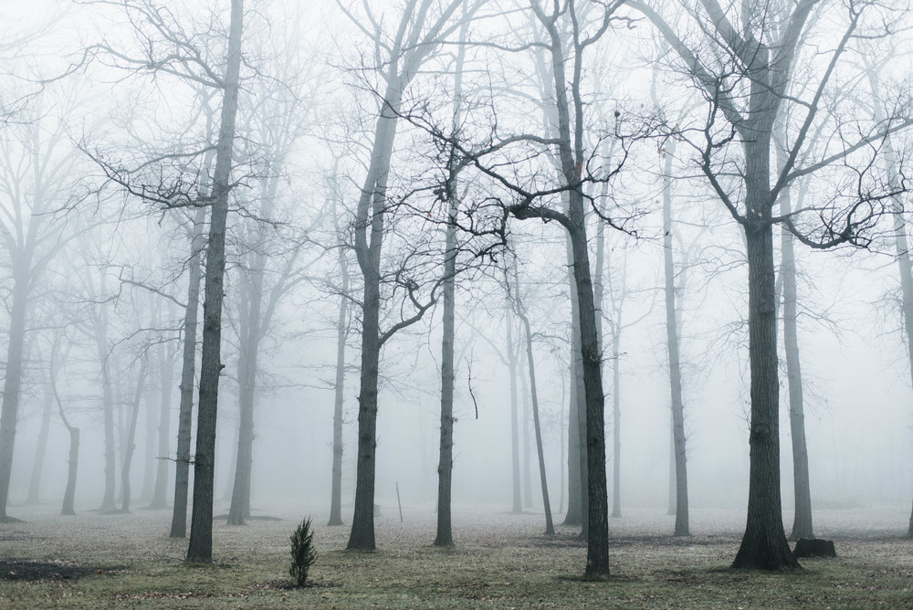 park-fog-12.jpg
