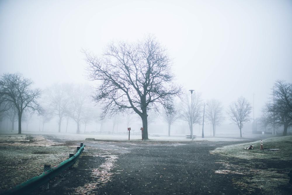 park-fog-10.jpg