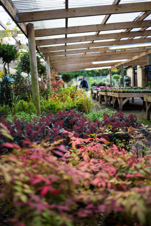 Pyle Garden centre-127.jpg