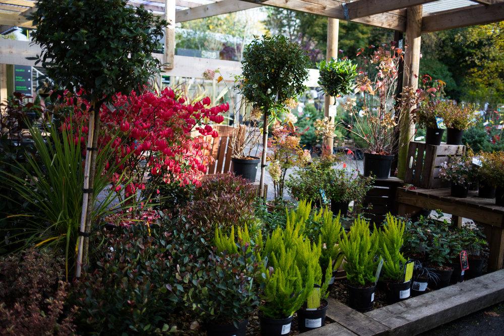 Pyle Garden centre-131.jpg