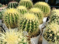 xcactus-house-plants.jpg.pagespeed.ic.xYPNsGmJDD.jpg