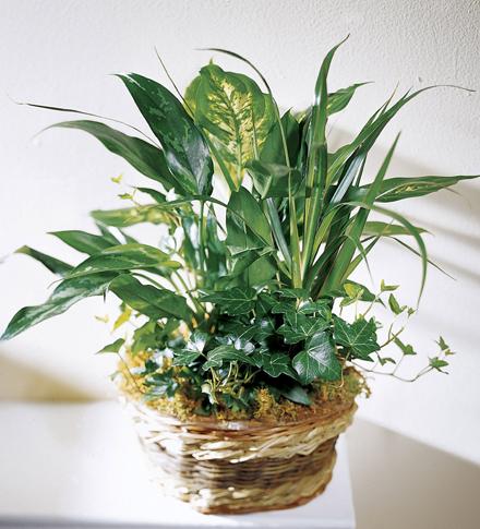 indoor foliage.jpg