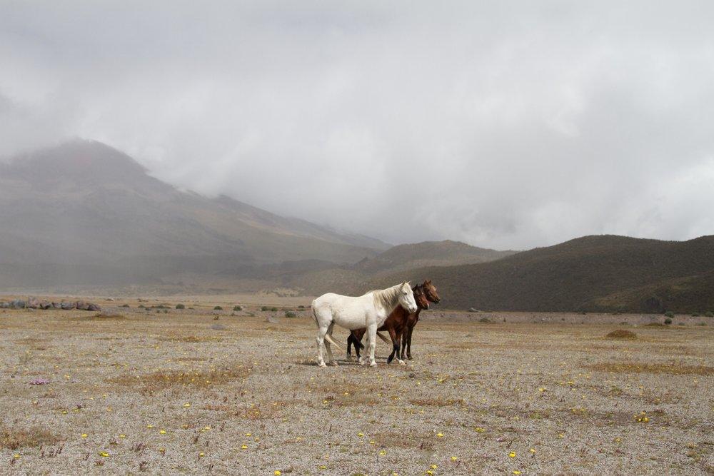 ECUADOR_2014 39.jpg