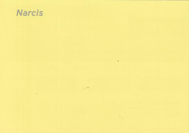 KCH 2 Narcis.jpeg