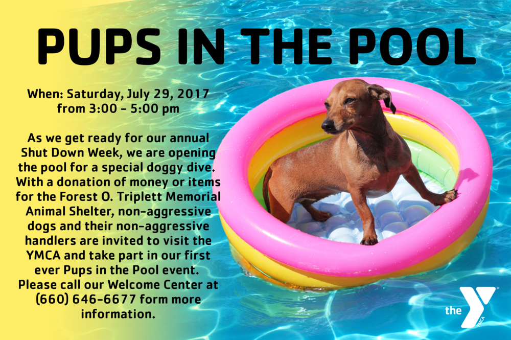 pups in the pool.png