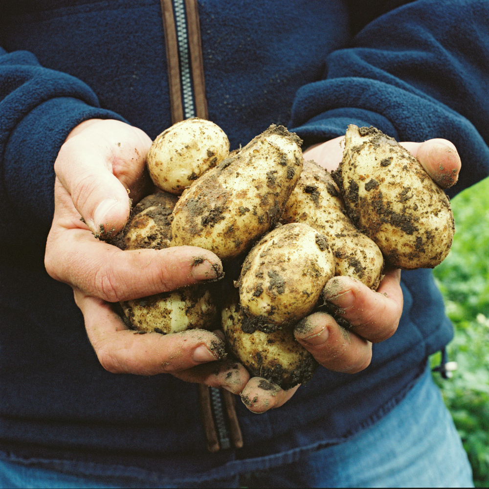 The locally sourced potatoes
