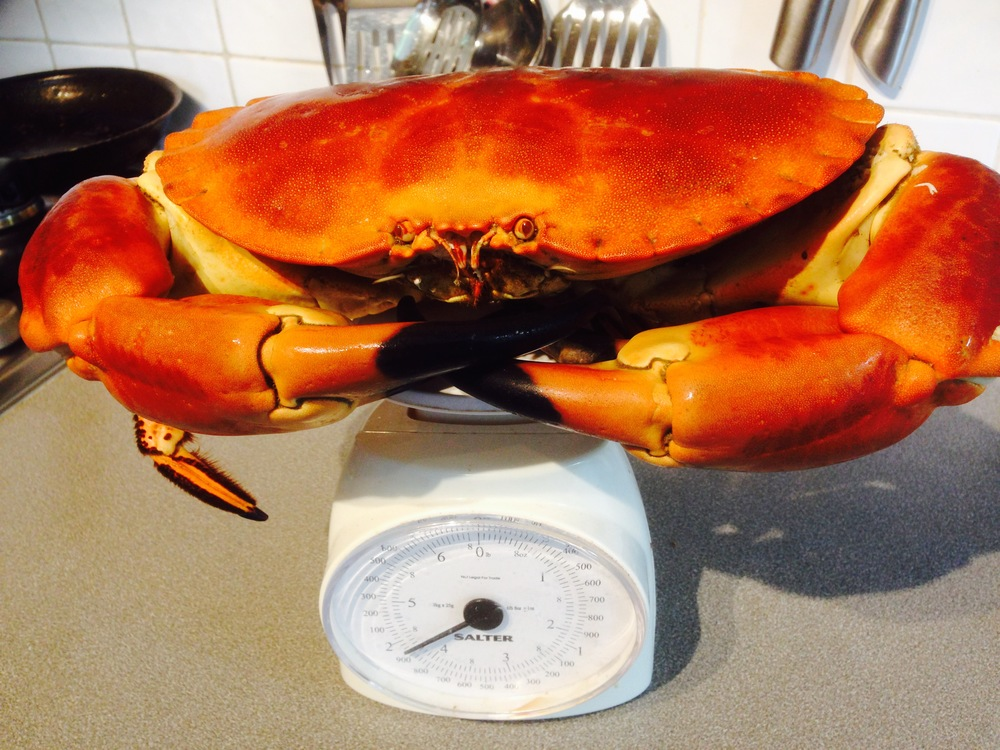 A giant fresh crab