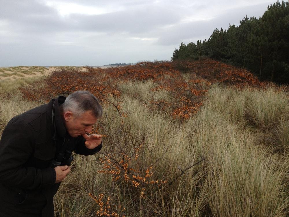 James and the giant Sea Buckthorn Plantation 2.jpg