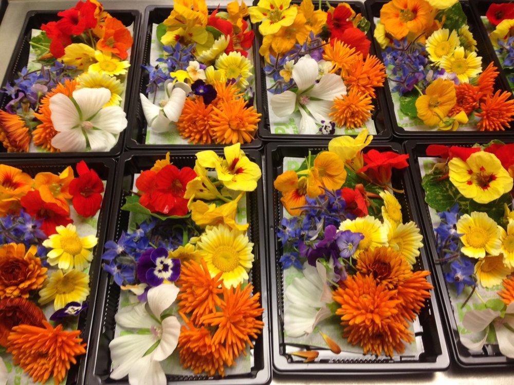 Selection of PJ taste grown edible flowers