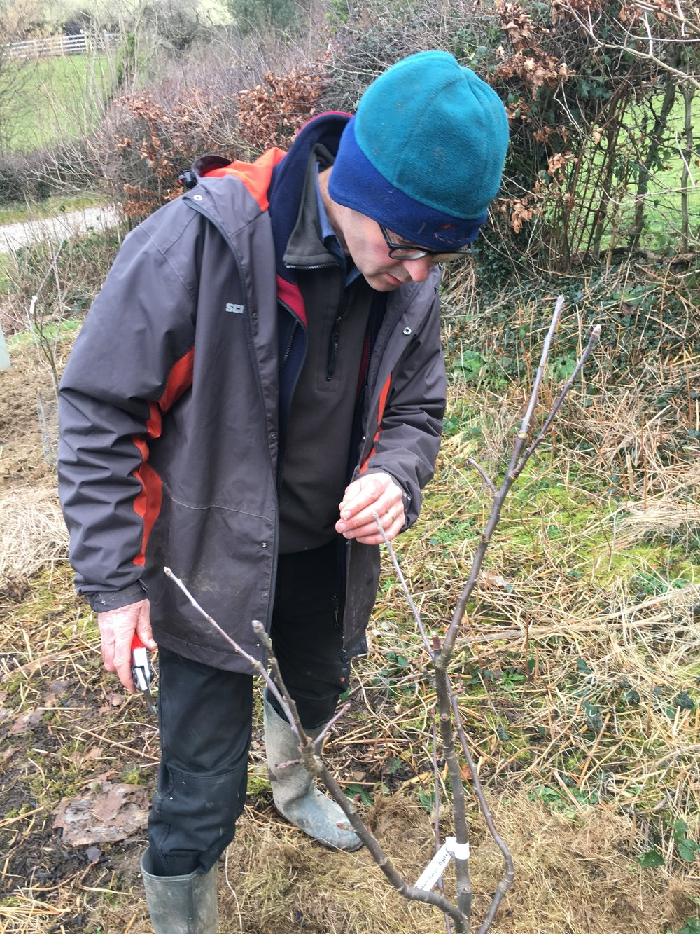 Huw deciding how to prune the Blenheim Orange