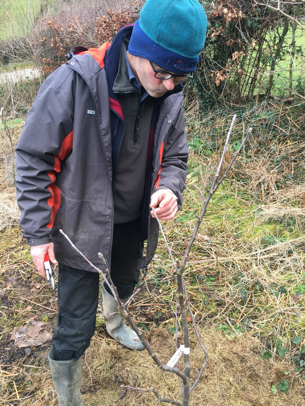 Huw still deciding how to prune to Blenhein Orange