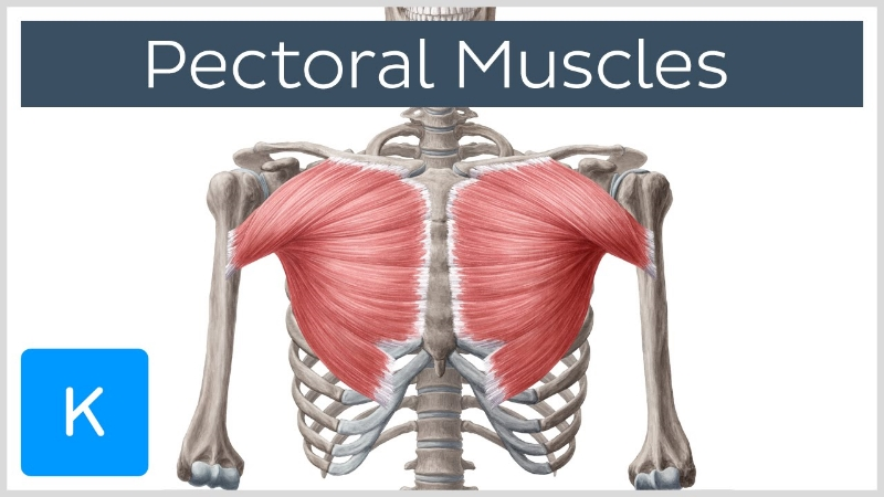 Why You Need Your Pecs Worked On Pain Relief Massage & Wellness ...