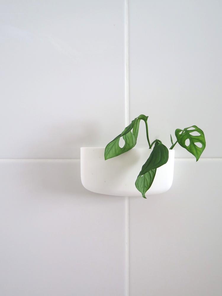 Air+plant+-+Salle+de+bain+-+Appartement+de+Buenos+Aires.jpg