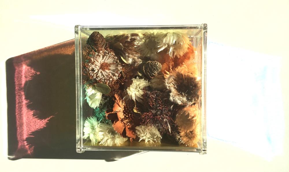 medflowerbox1.jpg