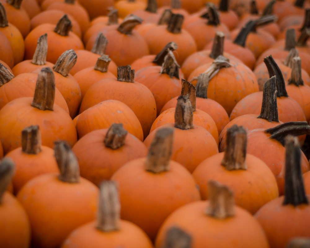 lots of pumpkins.jpg