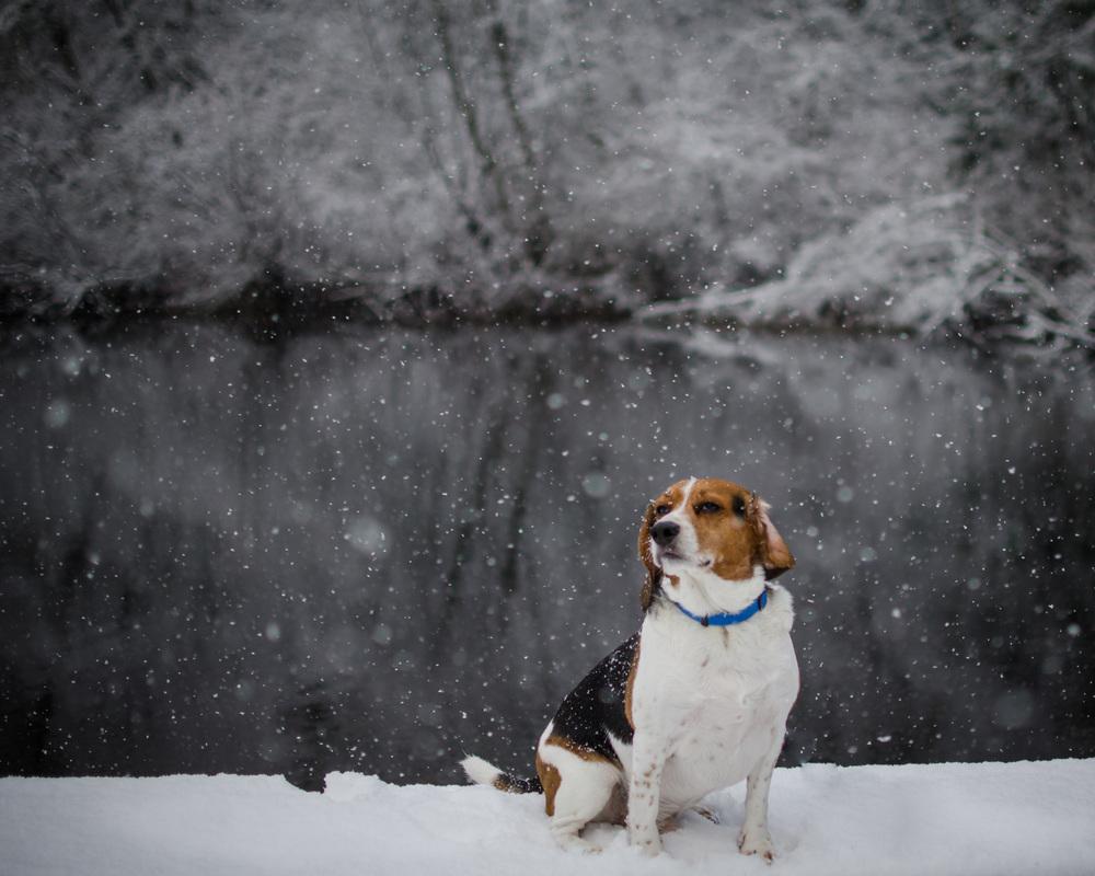 snow basil
