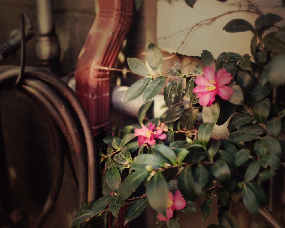 blooms in dec