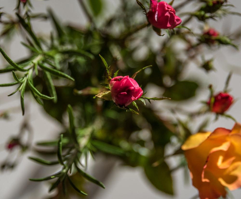 2016_11fall flowers 09.jpg