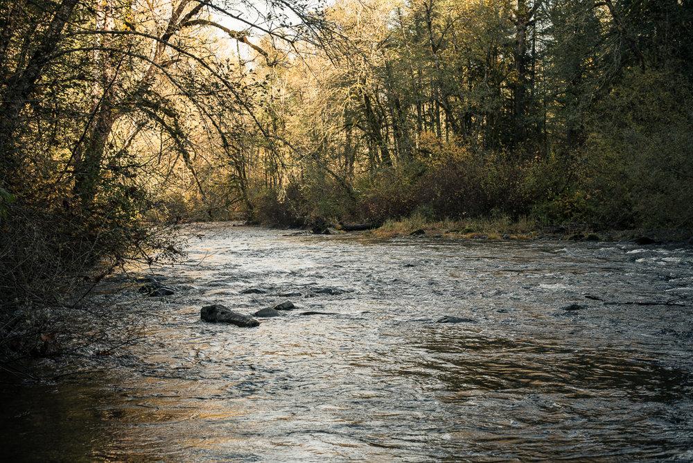 Cedar River, Washington