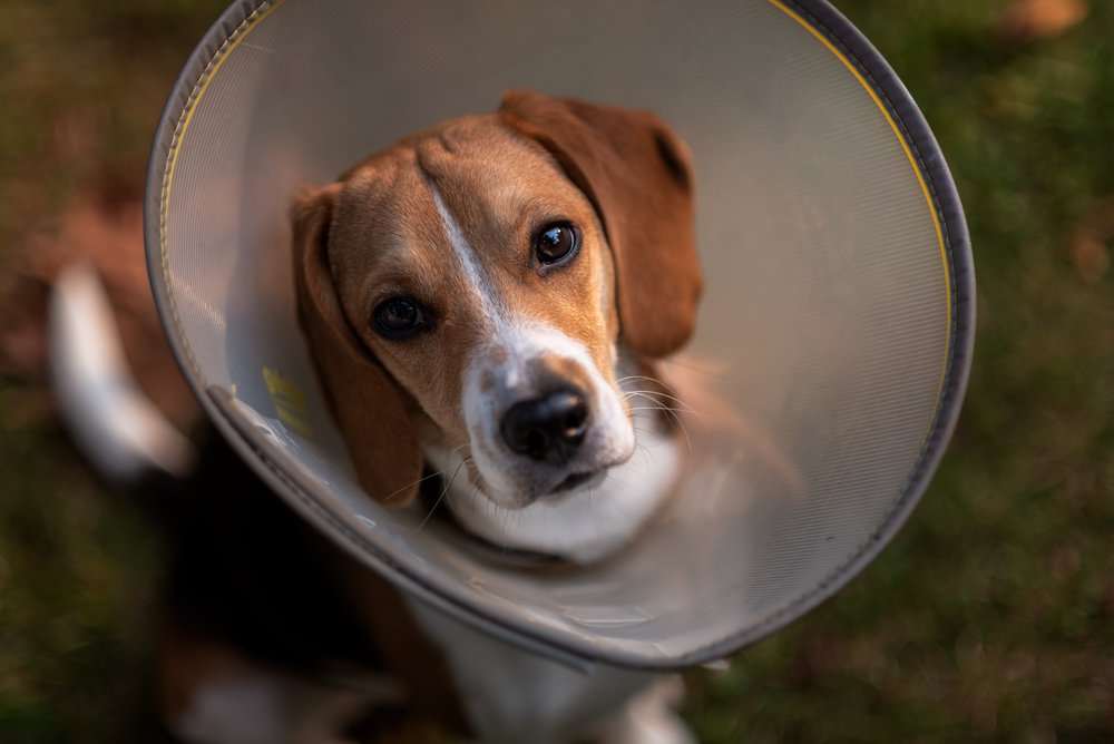 Baker || The Cone
