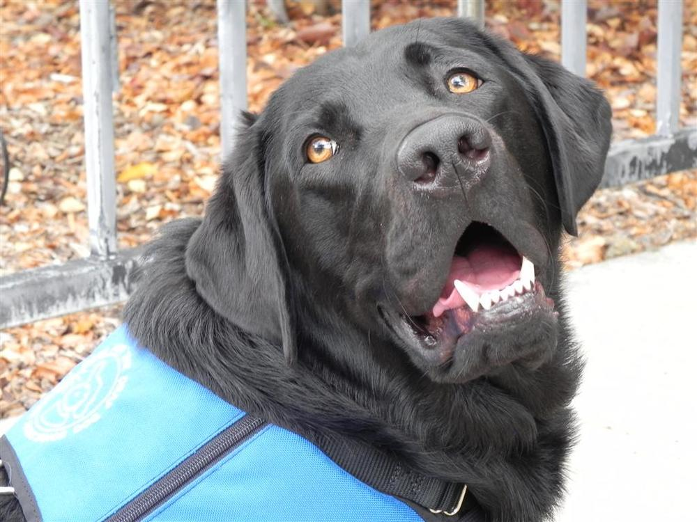 Program Assistance Dog Nelson helps out in the classroom.