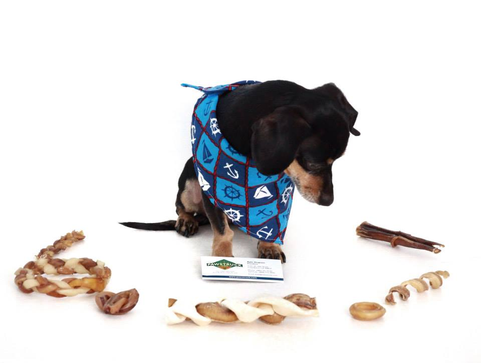 So many treats to choose from @ladybug_the_doxie is PAWSTRUCK!