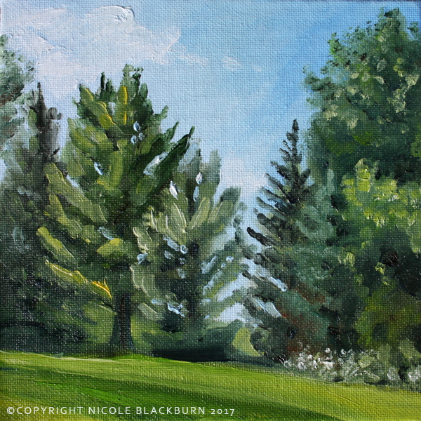"""Pines in Summer""   6 x 6 oil on canvas panel"
