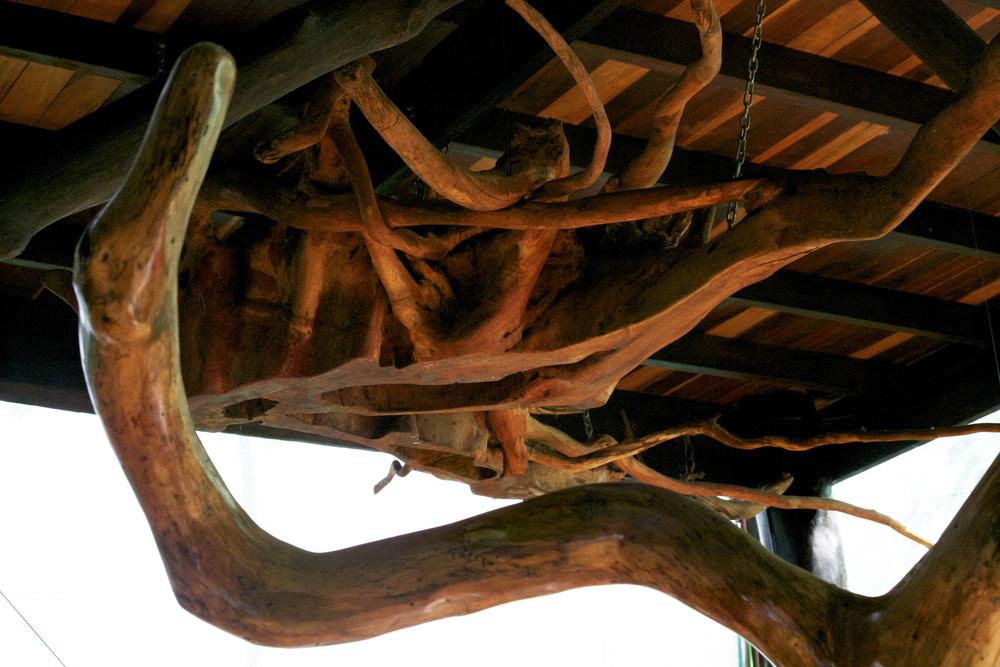 Cieling root.jpg
