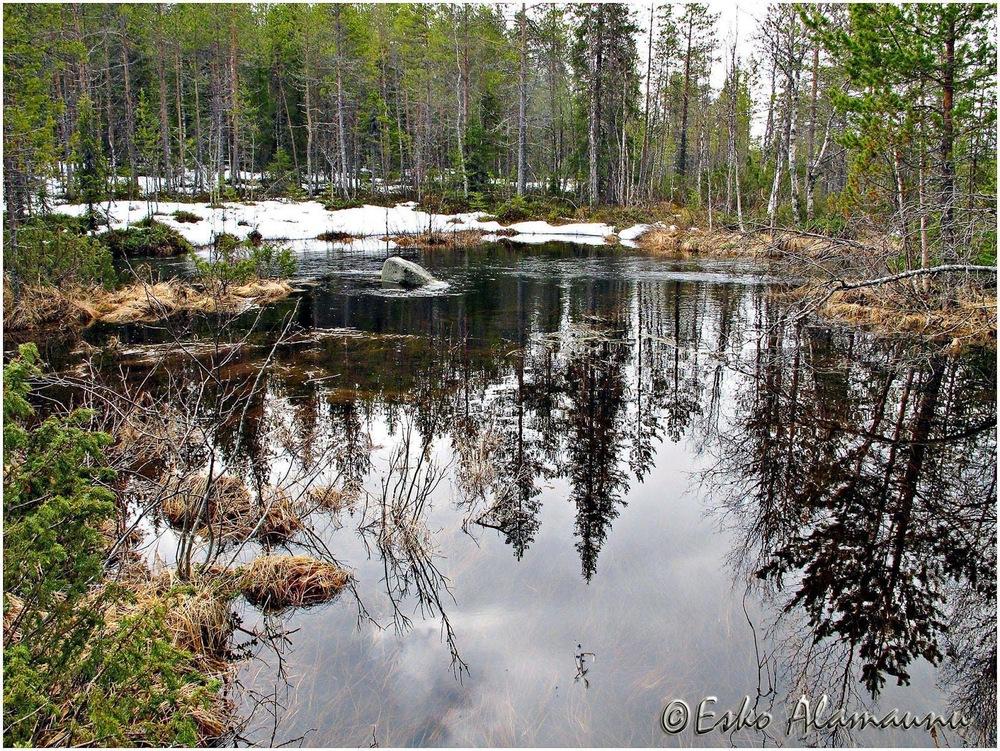 Pieni Metsä-Retki 4.jpg