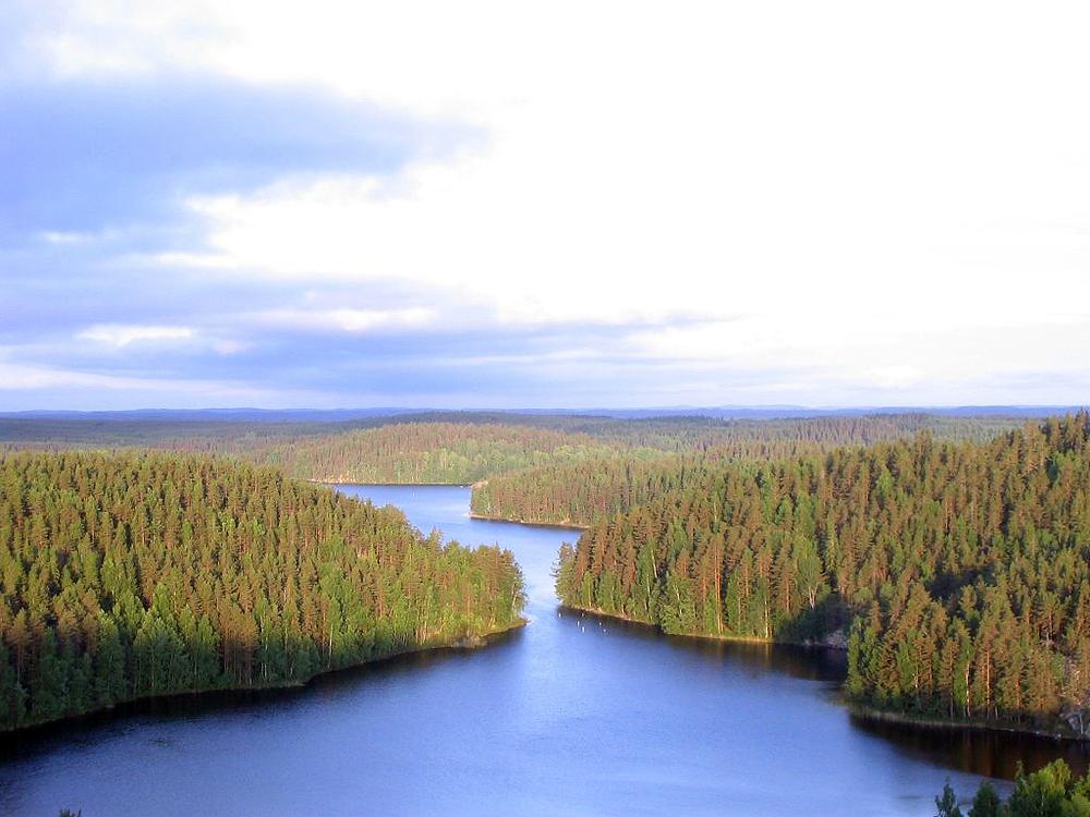Repoveden_Kansallispuisto_Kesayonauringossa.jpg