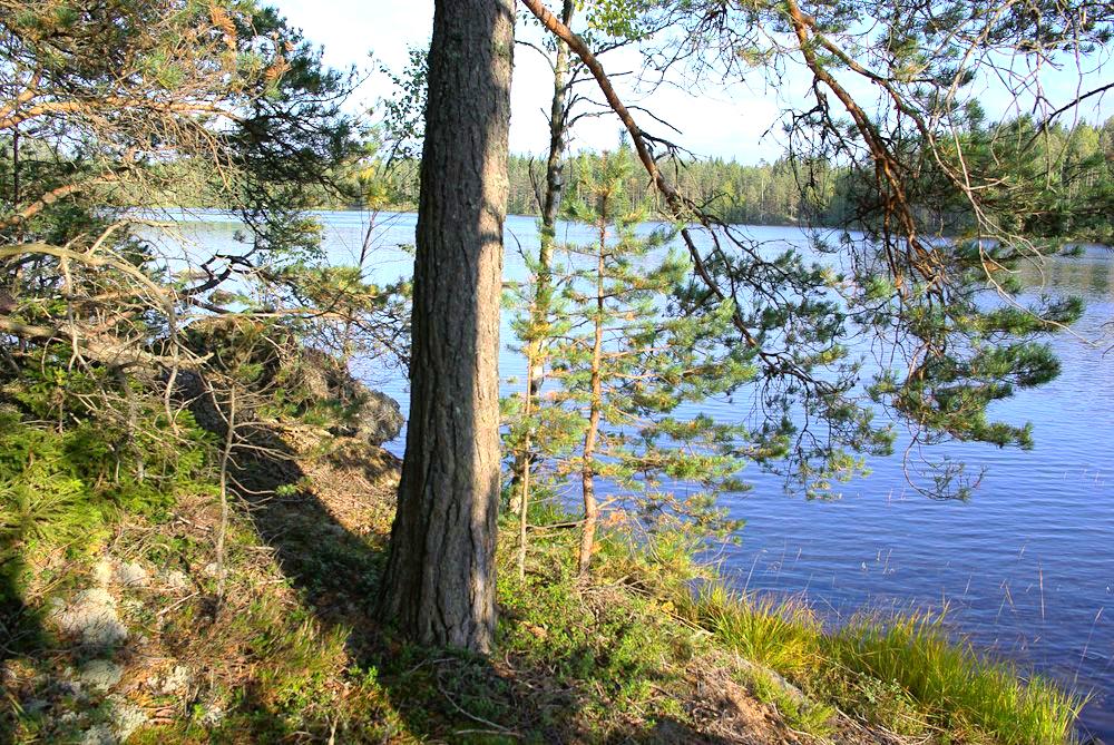 Земельный участок на лесном озере, Руоколахти, Финляндия.  Источник www.findacha.ru
