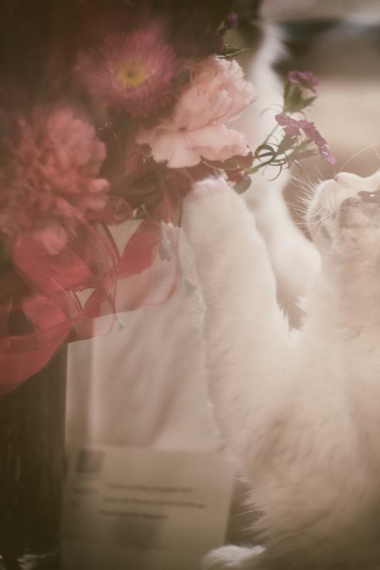 birthday flowers by amy kanka valadarsky