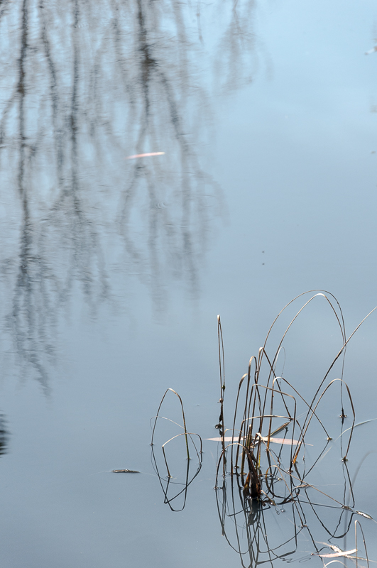 Winter reflections #3