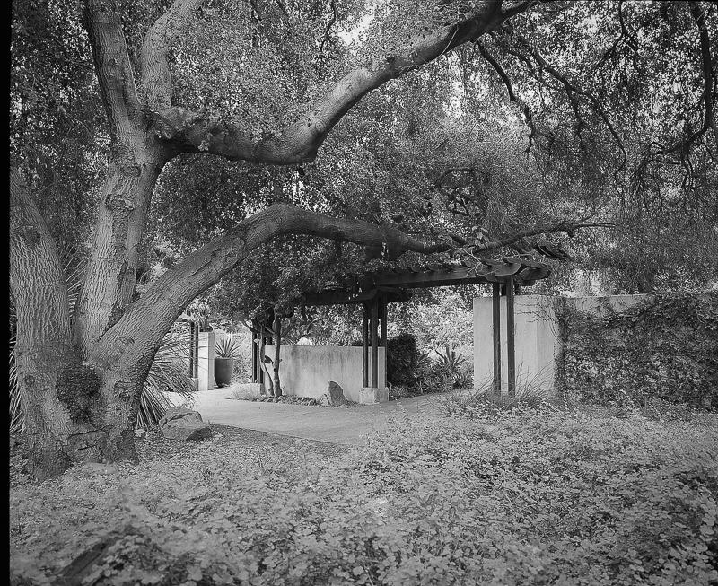 arboretum amy kanka valadarsky