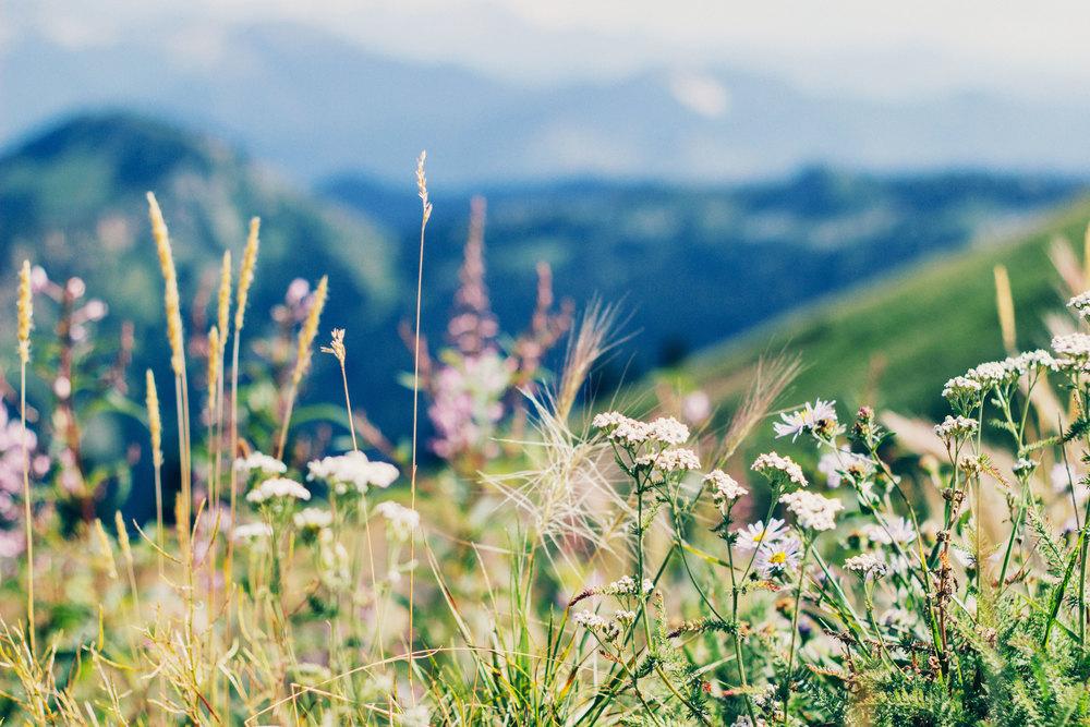 mountain-bg.jpg