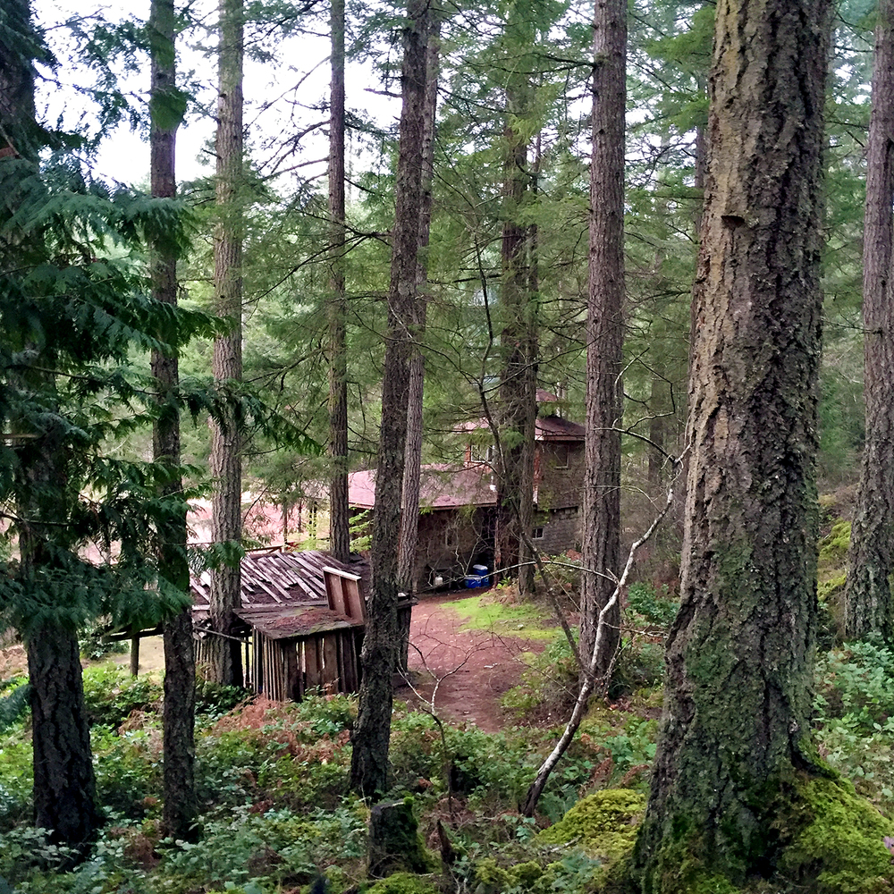 At the bottom of a path, nestled among the trees and the salal, you will find the heart of this 11 acre property. The Cabin.