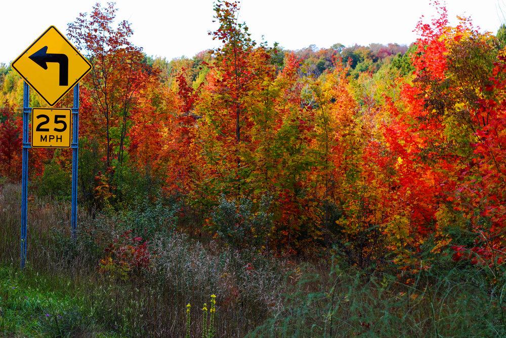 autumn sign.jpg