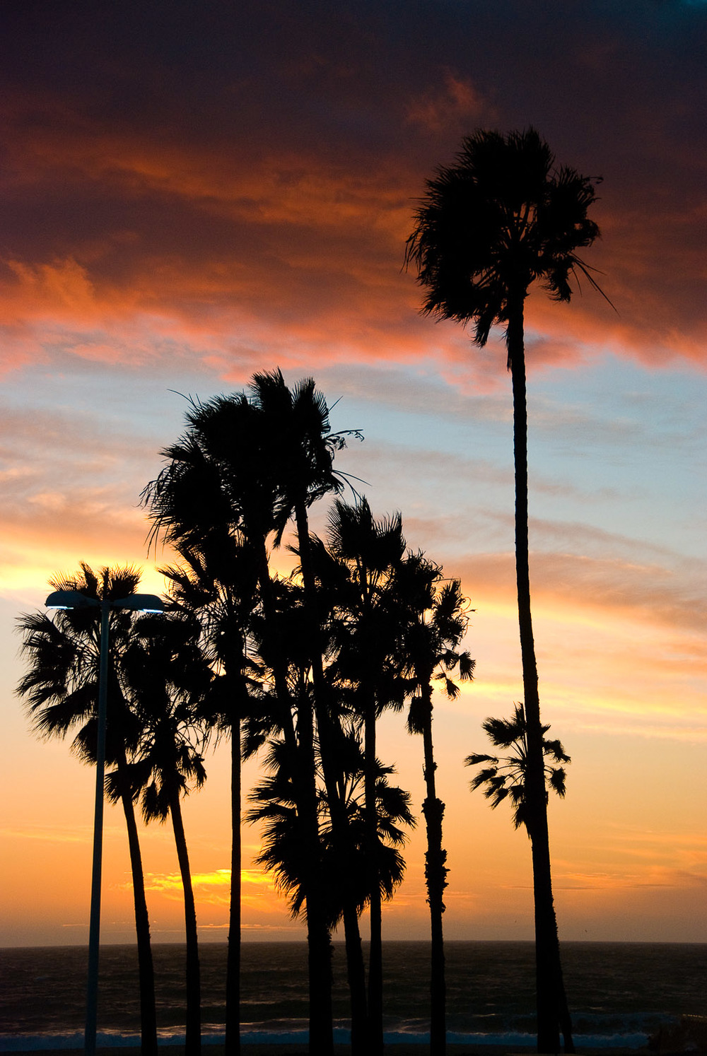 001_California Palms.jpg